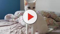 Adopter un chat quand on déteste les animaux de compagnie, c'est vraiment possible