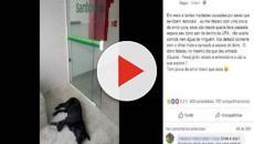 Em frente a UPA, cão espera por dono que faleceu em Santos e foto se torna viral