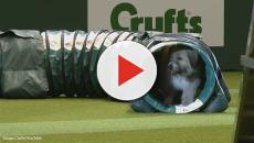 Kratu the funny rescue dog gets a standing ovation at Crufts Dog Show