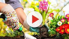 Motivos que fazem com que a jardinagem seja mais do que uma terapia