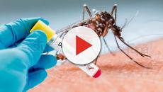 Mais de 25 mil casos de dengue foram registrados em Goiás este ano