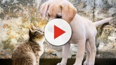 Lei aprovada pela Prefeitura do Rio permite que animais de estimação entre em hospitais