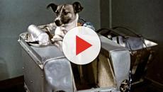 Cinque cani che per vari motivi hanno fatto la storia