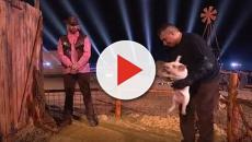 Ciao Darwin 8: la prova di coraggio con i maiali fa infuriare gli animalisti