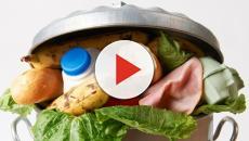 Lebensmittel: Vorerst kein Gesetz gegen die Verschwendung geplant