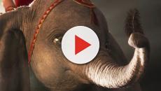 Dumbo vola anche sugli incassi: classico Disney riscritto da Tim Burton