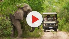 Sudáfrica endurece sus medidas de seguridad para impedir la caza furtiva