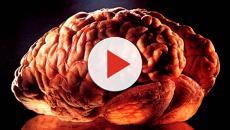 USA, riportati in vita cellule del cervello di maiale dopo la morte