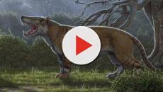 Kenya, scoperto antico 'leone gigante': pesava circa 1500 chilogrammi