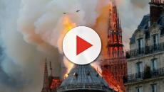 Notre-Dame: le 200 mila api che vivono sul tetto sono sopravvissute all'incendio