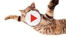 Grandes mitos a respeito da vida dos gatos