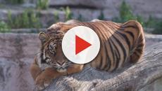 El Zoo de Barcelona se encuentra en riesgo por las propuestas del Ayuntamiento