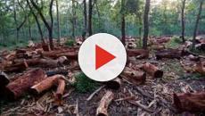La déforestation met en péril le monde