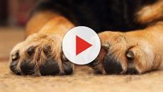 Lecce: Non fa curare il suo cane, 42enne multato di 10 mila euro