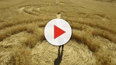 Cerchi nel grano e luce misteriosa nelle campagne marchigiane, ma per molti è una bufala