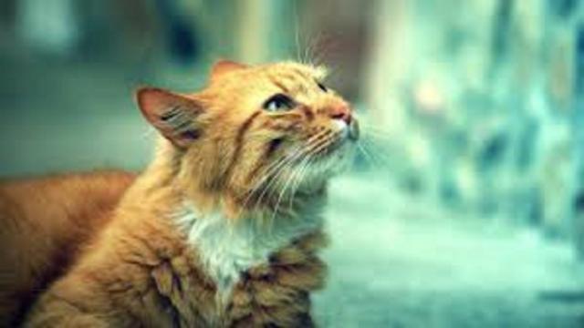 Les aliments qu'il ne faut pas donner aux chats