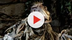 Dark Crystal : Netflix dévoile la bande-annonce de l'adaptation en série