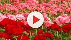 Pourquoi il ne faut plus acheter des fleurs coupées