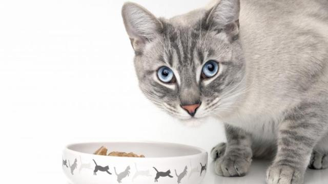Aliments : Les 5 erreurs à ne pas commettre avec un chat
