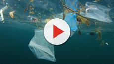 Tre tartarughe trovate morte nel Mar Tirreno