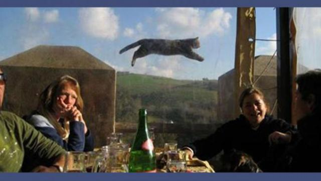 Les chats adeptes de photobombing