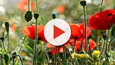 Anche le piante si stanno estinguendo: ricerca che proviene dall'orto botanico londinese