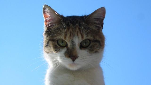 Insolites : Quand les chats s'excusent