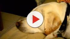 Les photos hilarantes des chiens avec leur maîtresse