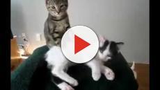 Les photos de chats légendées à mourir de rire