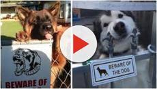Les chiens 'méchants' qui ne le sont pas du tout