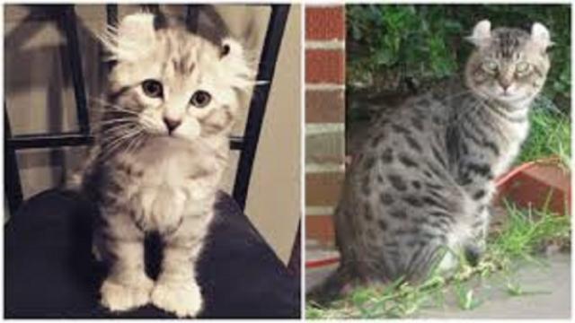 Les photos qui prouvent que les chats sont des démons