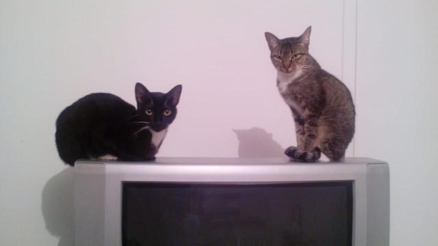 Os benefícios de criar um gato em casa