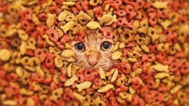 Un chat disparu dans une usine de croquettes rentre chez lui