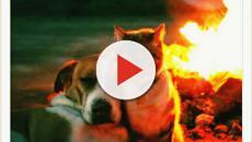 Animaux : 5 magnifiques photos d'un chien et d'un chat en voyage