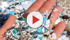 Microplastiche, ne ingeriamo 5 grammi a settimana: l'equivalente di una carta di credito