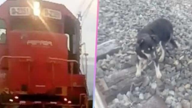 Detienen un tren en Chile para salvar a un perro encadenado a las vías