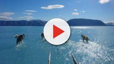 Groenlandia, cambiamento climatico: il ghiaccio si scioglie, la slitta cammina sull'acqua