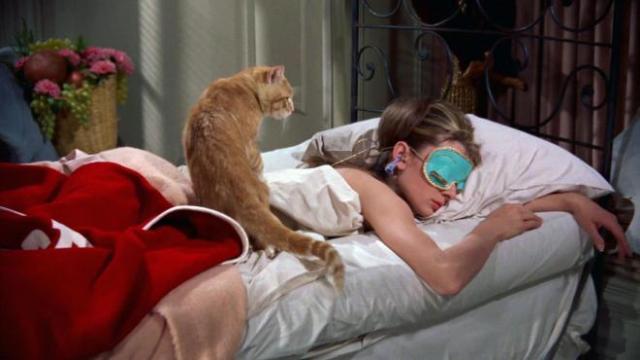 Ce qui montre qu'un chat aime son maître
