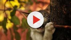 Les photos de chats qui font vraiment rire