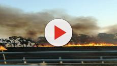 Brindisi, incendio nella riserva di Torre Guaceto