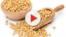 Uno studio dell'università di Toronto dimostra che la soia abbassa il colesterolo
