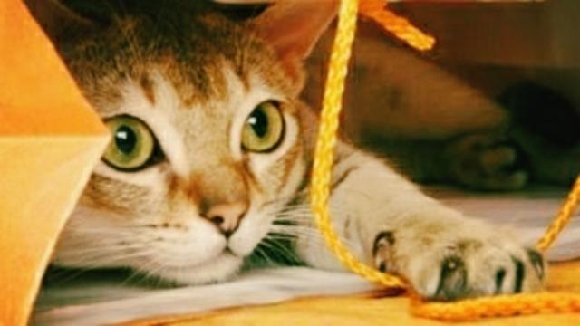 Animaux : 5 astuces pour apprendre des tours à son chat