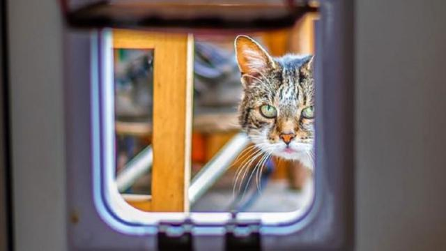 Ce que l'on ne sait pas sur les chats
