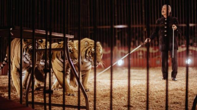 Bari, Ettore Weber ucciso da 4 tigri al Circo Orfei: animali trasferiti allo Zoo Safari