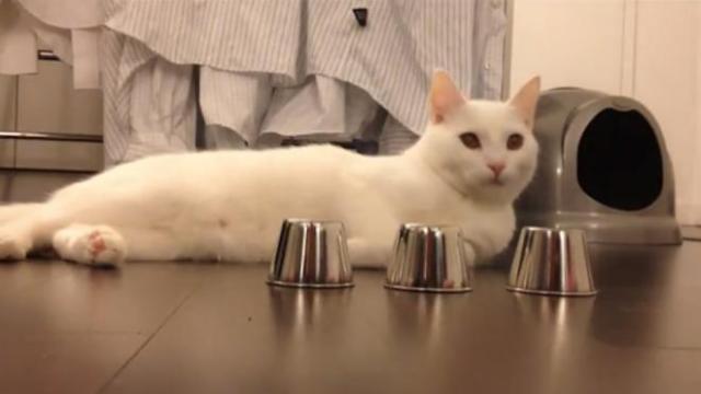 Les signes qui prouvent l'intelligence d'un chat