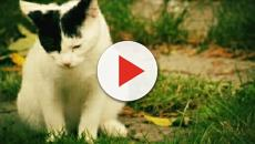 Animaux : 7 choses que l'on ignore totalement sur les chats