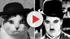 Les chats qui ressemblent à des personnes connues
