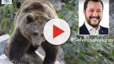 Trentino: ordine di abbattere l'orso 'M49' se si avvicina alle abitazioni