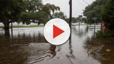 El huracán Barry trae a Louisiana fuertes inundaciones y peligrosas serpientes