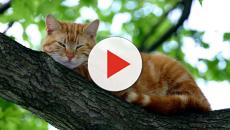 chat en colère: six signes qui doivent alerter